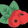 berries (1).png