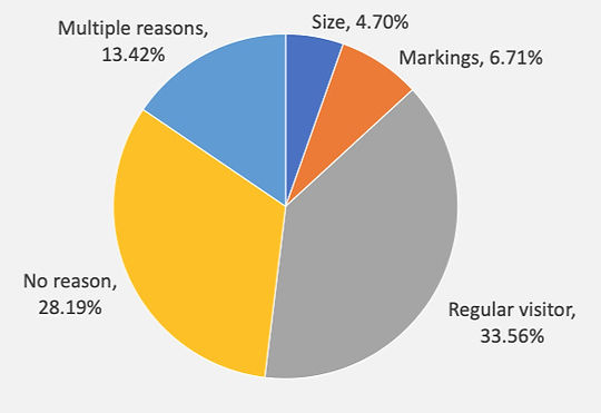 Pie%13.42% of respondents used multiple criteria to identify returning hedgehogs. The most common reason given was that they were regular visitors (33.56%), followed by behaviour (8.72%), markings or tags (6.71%), then size (4.70%) and appearance (4.70%). 28.19% of respondents gave no reason.20Chart_edited.jpg