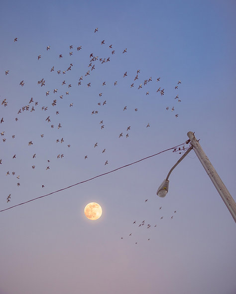 moon no.3