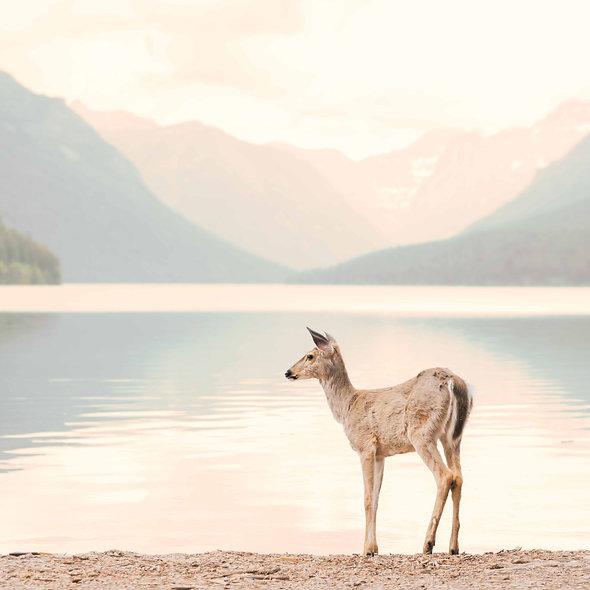 deer at Bowman print