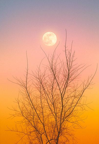 moon no.1