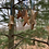 Thumbnail: Star Ornaments