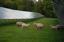 Solar PV plus Sheep v