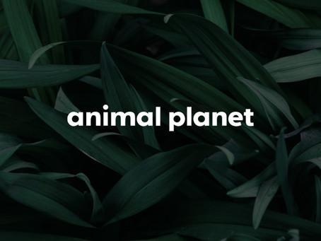 Animal Planet en het nieuwe logo