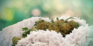 How to dry wet weed: Rice to the rescue
