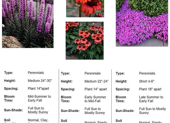 Pollinator Powerpack Brights (#2)