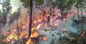 Взять в свои руки: природные пожары в Сибири 2019 года затронули 15 млн га леса