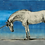 Thumbnail: สัตว์มหัศจรรย์และถิ่นที่อยู่ ฉบับภาพประกอบ 4 สี