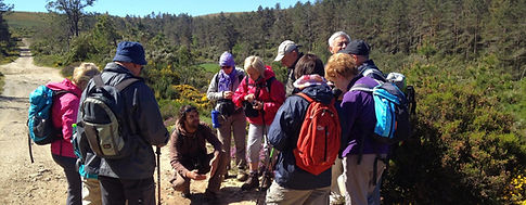 loup botanique birdwatching