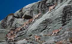 loup nature vie sauvage peneda gerês montagne