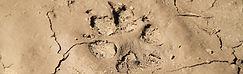 loup nature vie sauvage peneda gerês