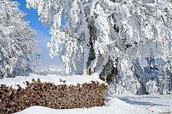 SCHWARZWALD wood-3016957_1920 (1) PIXABA