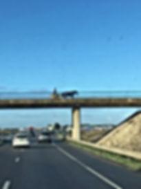 ils profitent de l'autoroute pour rouler