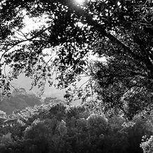 Vista de Árvores ilustrando o projeto LembrAr