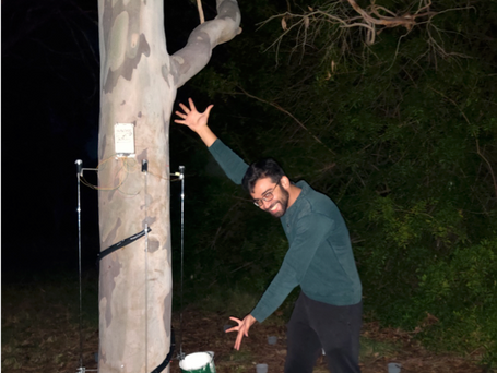 Measuring interception at tree scales