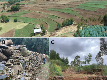 Soil and water conservation strategies in Ethiopia