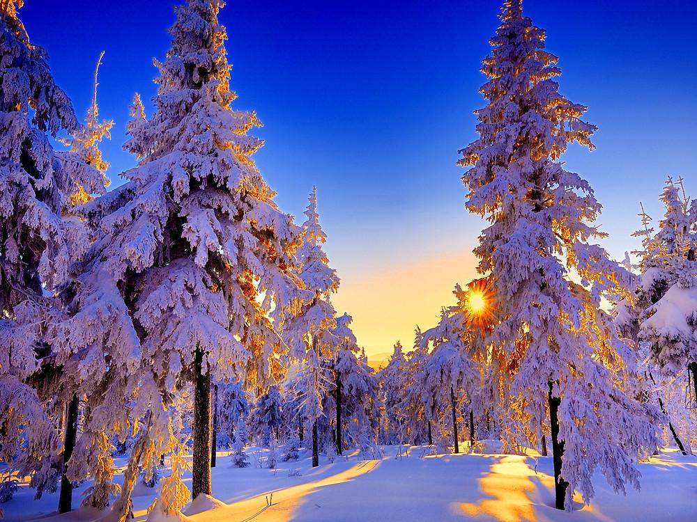 winter-sun_37332.jpg