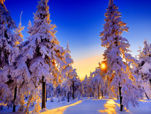 BLOG: Beating the Winter Blues Part III - 5 Natural Therapies to Busting those Winter Blues