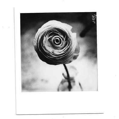 pola fleur.jpg