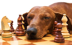 chessbore.jpg