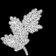 white logo leaf.png