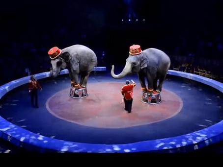 Московский проект «Цирк идёт к Вам»: как прошло цирковое онлайн-шоу?