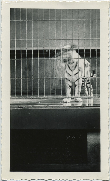 fpUncat(Tiger_Cage)