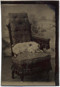 fp1873 (Dog-Chair)