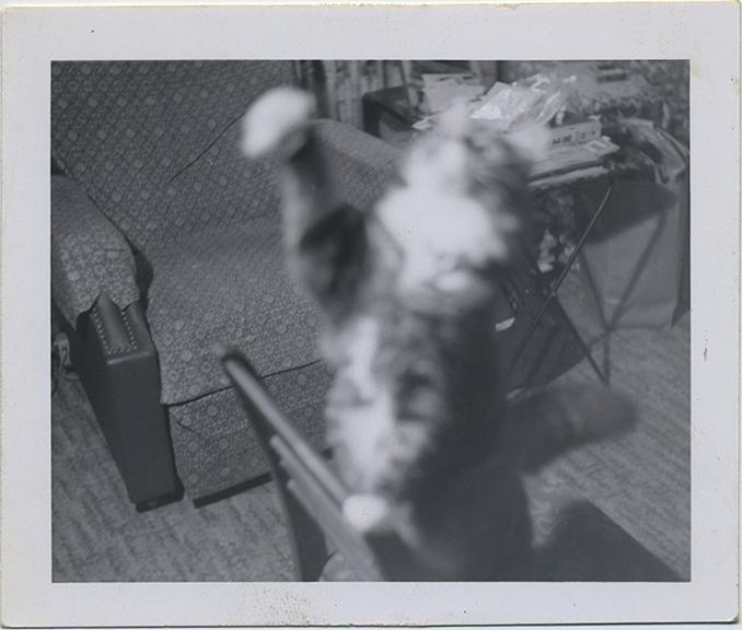 fp6788(CatStandsOnChair_Reaching_Blur)
