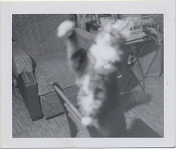 fp6788(CatStandsOnChair_Reaching_Blur)