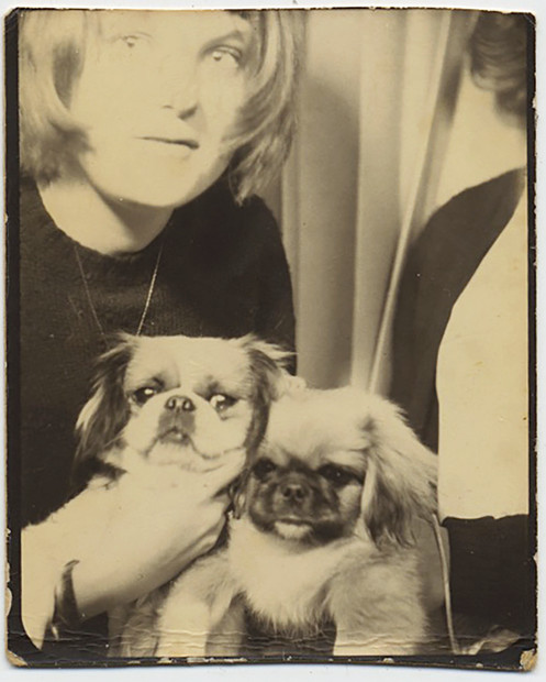 2 Adorable Long Haired Pugs Dogs Pets Meet In A Photobooth W Bob