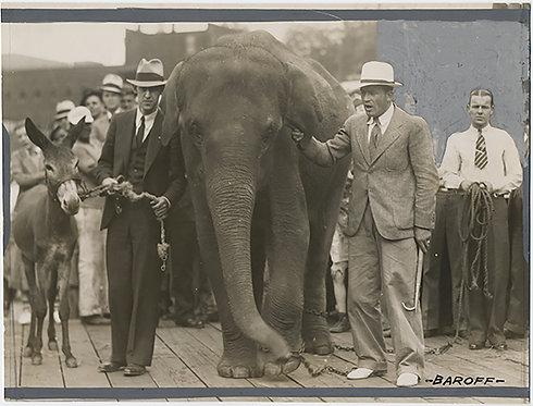 DEMOCRATIC DONKEY GOP ELEPHANT MASCOTS PARADE PAINTED PRESS PHOTO Harry BAROFF