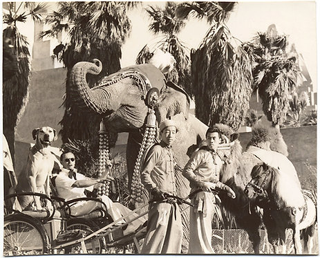 STRANGE UNUSUAL MARVELOUS HOLLYWOOD? STAR DOG on RICKSHAW ADORNED ELEPHANTS