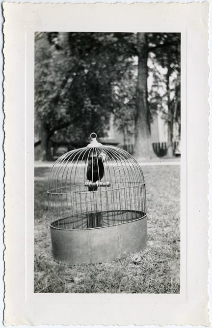 fp1552 (bird in cage)