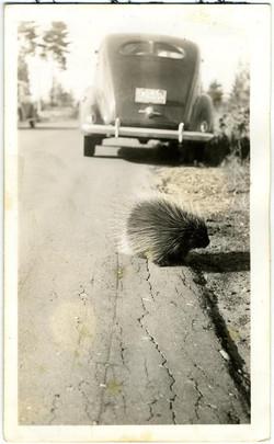 fp2183(Porcupine-Car)