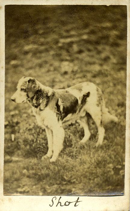 fp0821 (dog shot)