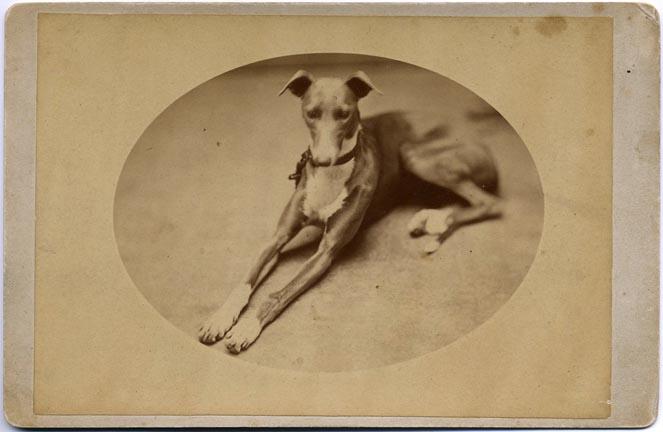 fp1766 (greyhound)