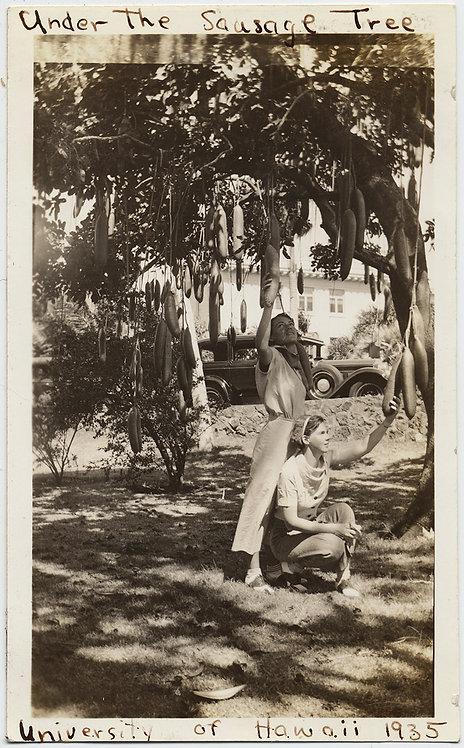 HOLD THAT BIG SAUSAGE!  WOMEN GROPE PHALLIC FRUIT on SAUSAGE TREE FREUDIAN PHOTO