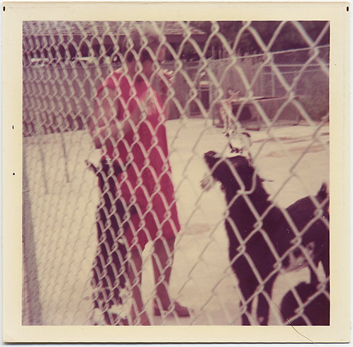 STUNNING ALMOST ABSTRACT WOMAN in RED & BLACK DOGS BEHIND CHAIN LINK FENCE