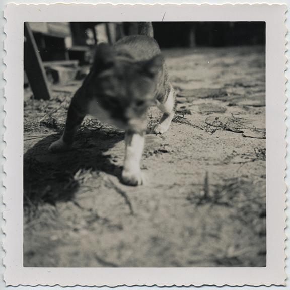 fp5156(Cat_GroundLevelShot_Blur)