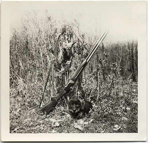 IN the FIELD HUNTING STILL LIFE GROUSE PHEASANT TERRIER HUNTING DOG POSE w RIFLE