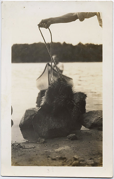 EXTRAORDINARY DISEMBODIED ARM HOLDS PORCUPINE? on LEASH at WATER'S EDGE!