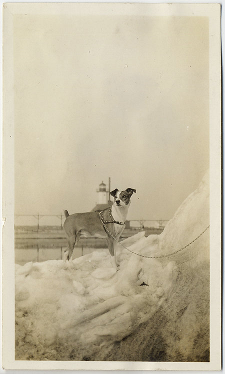 GORGEOUS YOUNG PUPPY DOG w HARNESS LEASH on SNOW PILE w LIGHT HOUSE BACKGROUND