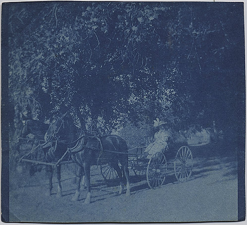 CYANOTYPE of WOMAN in VICTORIAN HORSE DRAWN CARRIAGE BUGGY under TREES