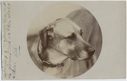 fp5696(RPPC_Dog_OverSixFeetLong)
