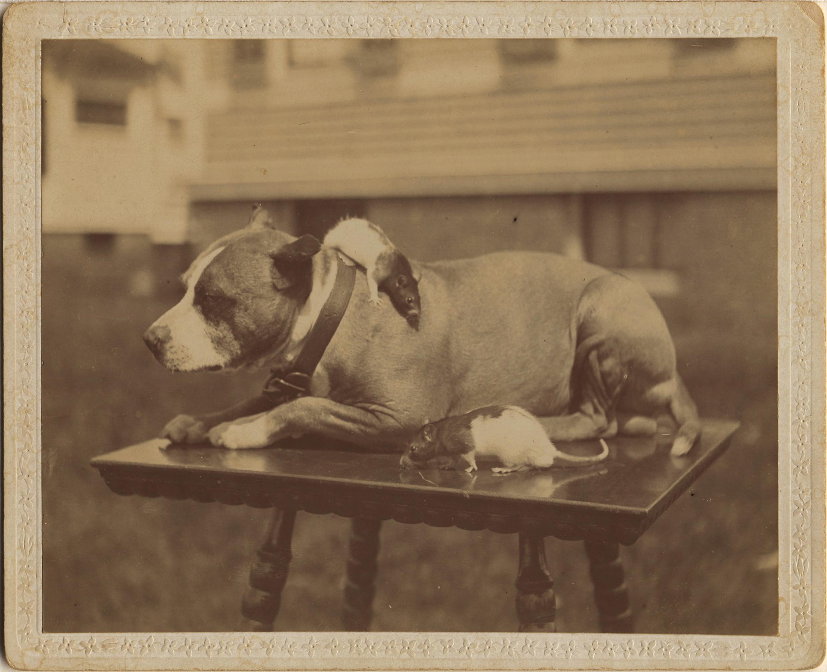 fp3269(Dog.Rats)