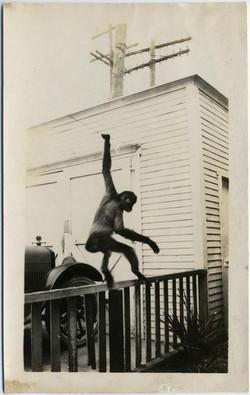 fp1190 (Chimp on Railing)