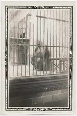 fp2803(Gorilla_Zoo)
