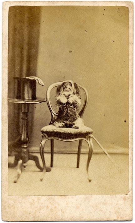 fp1631 (Begging Dog w Hat, Gloves & Cane)