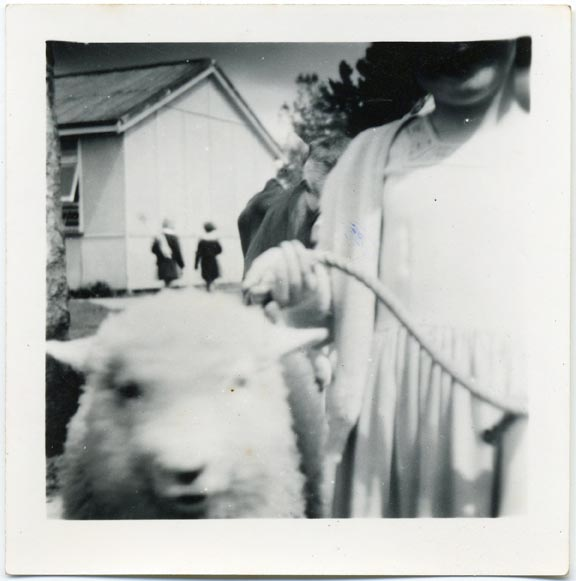 fp2047 (Girl-Sheep-Odd)